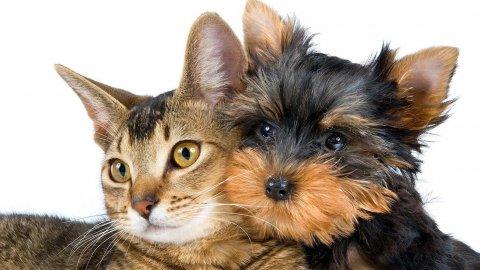 Cane salva la vita di un gatto donandogli il sangue