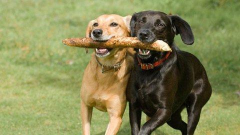 Giochi per cani: qualche consiglio utile