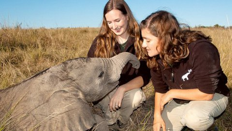 L'elefantina adottata da due ricercatrici