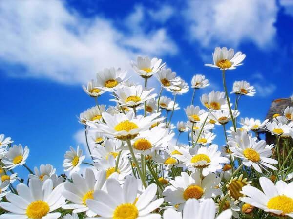 equinozio-di-primavera-il-primo-giorno-di-pri-L-PfIjpZ.jpeg