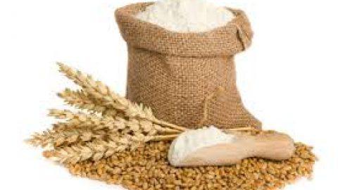 DIZIONARIO: La forza della farina
