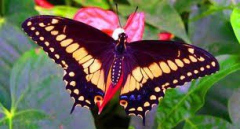 Farfalle tropicali al Bioparco di Roma