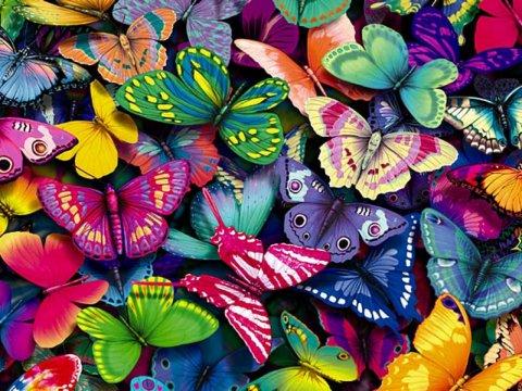 Le farfalle si mimetizzano grazie ad un gene