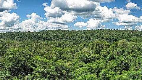 La foresta Amazzonica minacciata dalla siccità