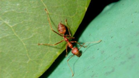 Gli insetti non fanno sesso sotto la pioggia