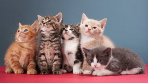 Curiosità sui nostri amici felini
