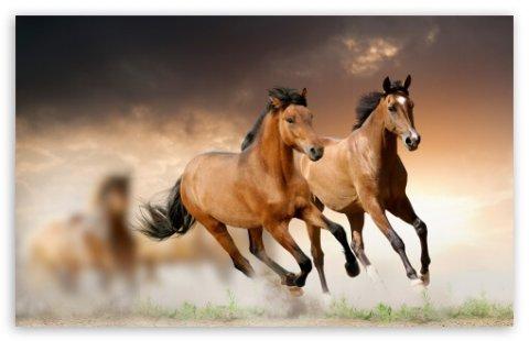 Quale antiparassitario per cavalli scegliere?