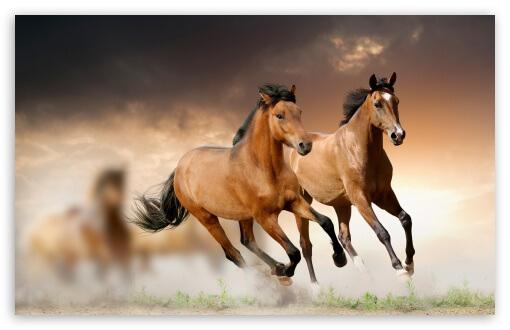 horsesrunning2-t2.jpg